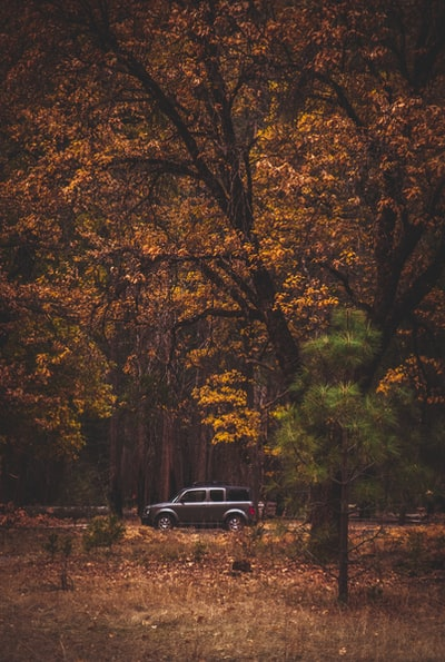 A person driving a forest